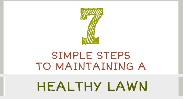 How to maintain a healthy lawn in 7 simple steps